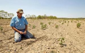 Agricultorii estimeaza pierderi de 50% la culturile de cereale, din cauza secetei. Guvernul promite despagubiri