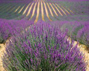 Sectorul vegetal: Fermierii vor primi subventii de peste 110 milioane de euro