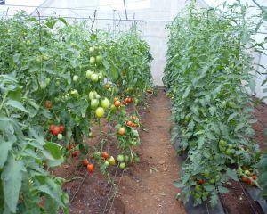 Agricultura ecologica: cererile pentru ajutorul de minimis se depun pana pe 5 iulie