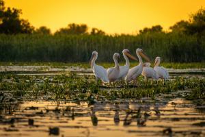 4 activitati la care sa iei parte in Delta Dunarii