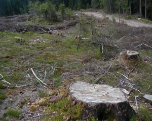 Reportaj Paul Barbu: Sa plantam paduri pentru copaci. Povestea unui stejar