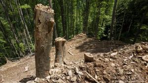 Atentie: Orice cantitate de lemn taiata din padurile Romaniei va fi considerata infractiune