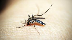 Care sunt simptomele si cum sa va protejati de infectia cu virus West Nile