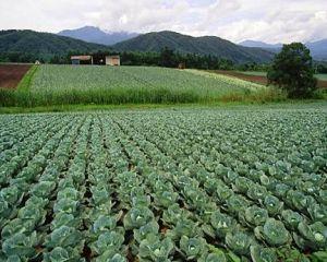 Sprijin financiar de la Guvern pentru sectoarele vegetal si zootehnic