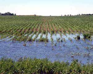 Fermierii vor primi ajutoare de minimis pentru culturile calamitate