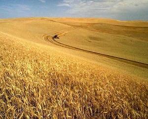 Inchirierea terenurilor agricole  o afacere de 50 de miliarde de dolari anual