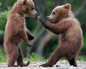 URSUS sustine Centrul Pentru Reabilitarea Ursilor Orfani