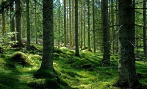 Generali Group a cumparat cu 11 mil. euro circa 1.800 hectare de paduri in Romania