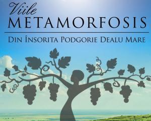 Schimbare de nume si identitate vizuala pentru compania producatoare de vinuri premium Metamorfosis