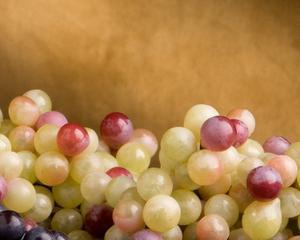 Vinurile producatorilor bulgari au fost premiate cu aur si argint la International Wine Contest Bucharest 2014
