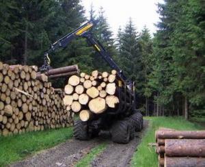Romania a ramas fara inca 16,972 milioane de metri cubi de lemn